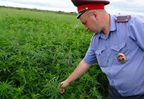 ВОдинцовском районе проходит антинаркотическая операции «Мак»