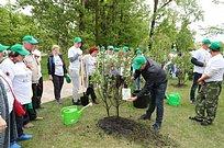 Более 18700 человек приняли участие вакции «Лес Победы» вОдинцовском городском округе