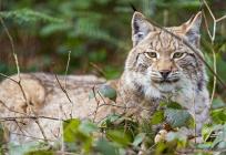 Введен запрет насодержание некоторых видов животных вМосковской области