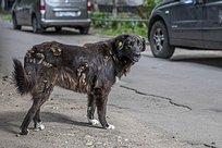 Более 400 бездомных собак чипированы вОдинцово