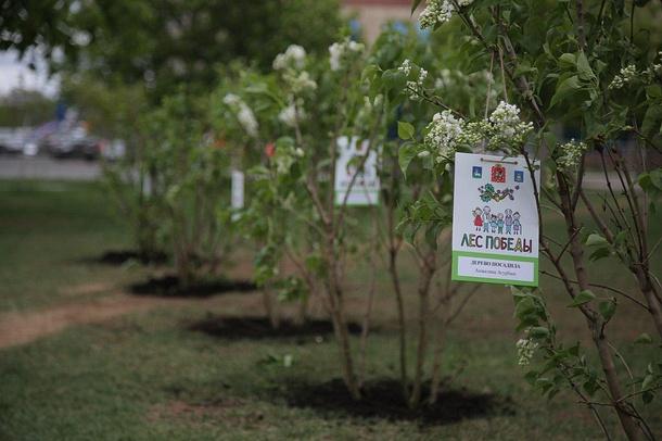 11мая, вОдинцовском городском округе, как иво всем Подмосковье, состоялась экологическая акция «Лес Победы», Май