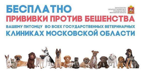 Сделать прививку против бешенства можно бесплатно влюбой участковой ветеринарной лечебнице Одинцовского округа, Октябрь