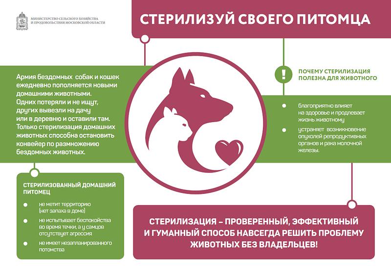 Минсельхоз Московской области проводит разъяснительную работу постерилизации домашних животных, Июль