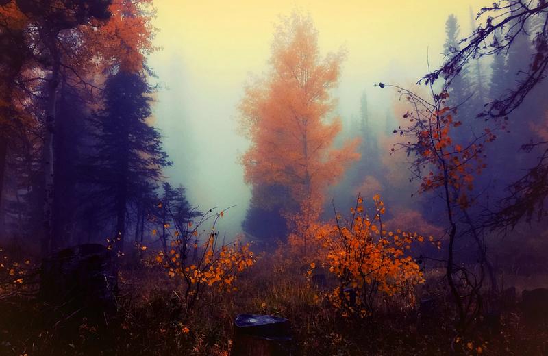 Сначала октября влесных массивах региона ликвидировано 4пожара, Октябрь